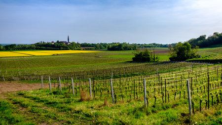 Fields of Friuli Venezia-Giulia in a spring day Imagens