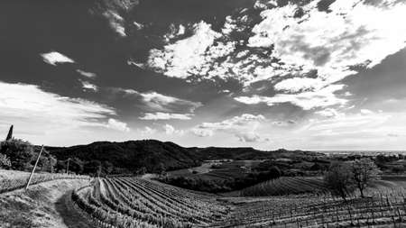 The Italian vineyards at the border with Slovenia in a summer afternoon Imagens