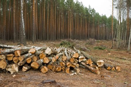 stacked up: Logs are stacked up after being cut down