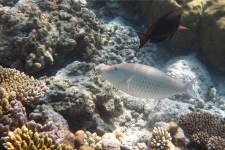 coral colony: Foto di Colonia corallino e pesci corallini