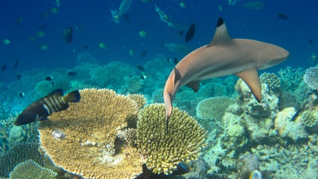 Photo of underwater landscape with shark photo
