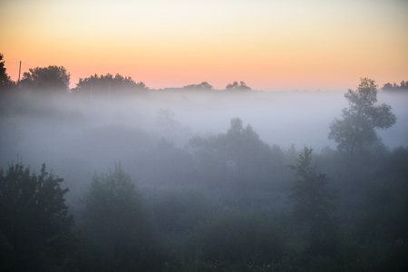 dense morning fog in a summer forest at sunrise Stock Photo