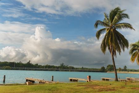 varadero: Beautiful views of the palm tree, Varadero, Cuba Stock Photo
