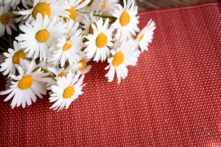 chamomile flower: daisies on the table skaterti