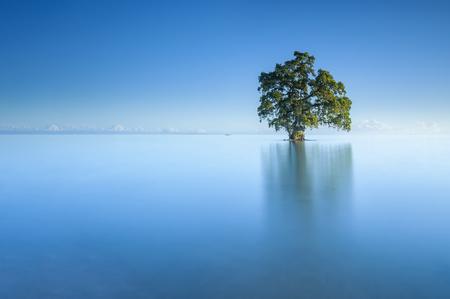 美しい Lahad Datu ビーチ、ボルネオ マレーシアの真ん中の青空朝の単一の孤独なツリー 写真素材