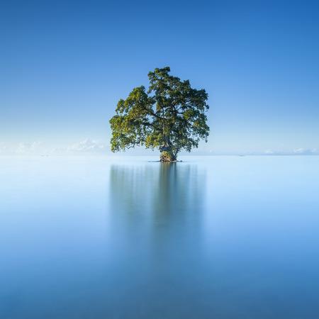 美しい Lahad Datu ビーチ、ボルネオ マレーシアの真ん中の青空朝の単一の孤独なツリー 写真素材 - 47724996