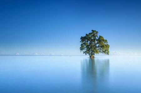 美しい Lahad Datu ビーチ、ボルネオ マレーシアの真ん中の青空朝の単一の孤独なツリー 写真素材 - 47724998