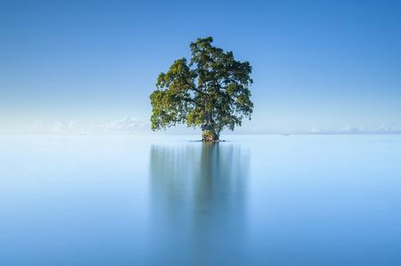 美しい Lahad Datu ビーチ、ボルネオ マレーシアの真ん中の青空朝の単一の孤独なツリー 写真素材 - 47725000