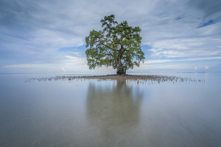 Lahad Datu ビーチ、ボルネオ マレーシアの午前中に海の中の孤独な単一のツリー 写真素材 - 47863300