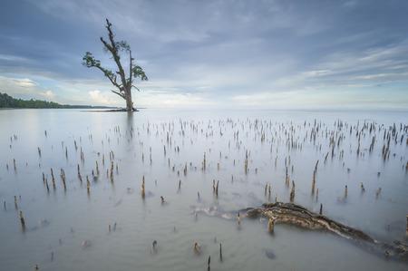 ボルネオ マレーシア Lahad Datu ビーチの日没時に海の中でフォア グラウンドで 1 つのツリー 写真素材 - 47863299
