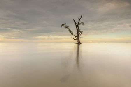 ボルネオ マレーシア Lahad Datu ビーチの日没時に海の中の孤独な単一のツリー 写真素材 - 47863312