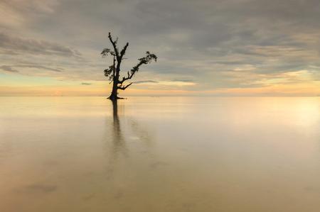 ボルネオ マレーシア Lahad Datu ビーチの日没時に海の中の単一のツリー 写真素材 - 47863310