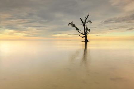 ボルネオ マレーシア Lahad Datu ビーチの日没時に海の中の単一のツリー 写真素材 - 47863311