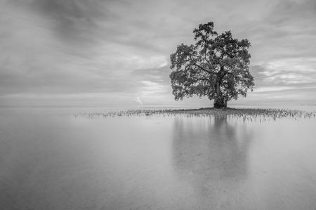 朝の気分の黒と白のトーンの反射を含む単一の孤独なツリー 写真素材 - 47945654
