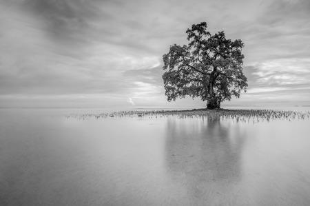 朝の気分の黒と白のトーンの反射を含む単一ツリー 写真素材 - 47945656