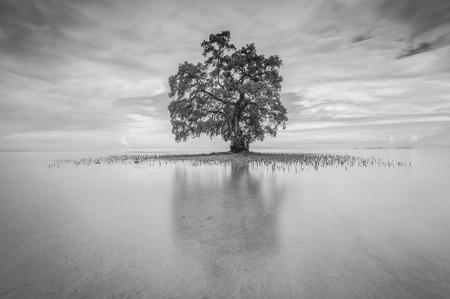 黒と白のトーンで Lahad Datu サバで単一のツリー 写真素材 - 47945658