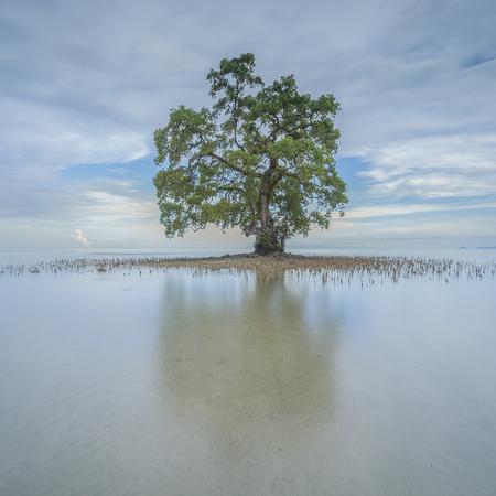 正方形の気分に単一のツリー 写真素材 - 47945659
