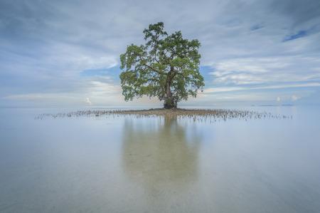 朝 1 つの孤独な木 Lahad Datu ビーチ、サバで反射しながら 写真素材 - 47945661