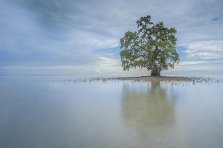 朝 1 つの孤独な木 Lahad Datu ビーチ、サバで反射しながら 写真素材 - 47945665
