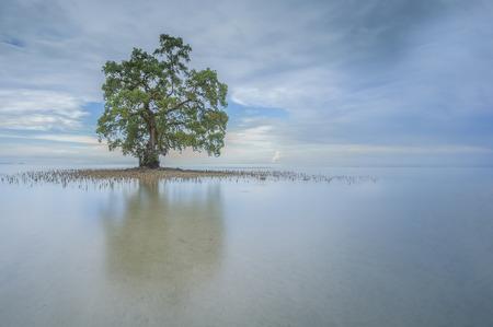 美しい Lahad Datu ビーチ、サバの真ん中の青空朝の反射を含む単一の孤独なツリー 写真素材 - 47945669