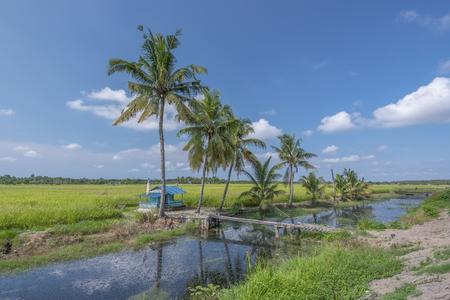 スンガイ Rambai 村マラッカ、マレーシアでの水田と椰子のツリーのビュー