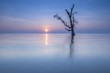 単一のツリーは、美しい日の出の中に一人で立っています。