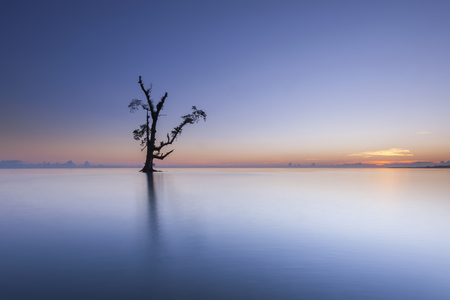A single tree standing alone during sunrise.