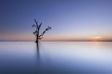サンライズの中に一人で立っている単一のツリー。