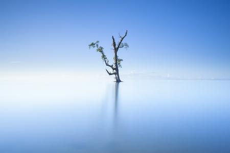一本の木と青い空の霧の朝 写真素材 - 50227258