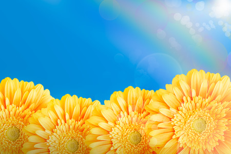 Yellow gerberas on the blue sky background photo