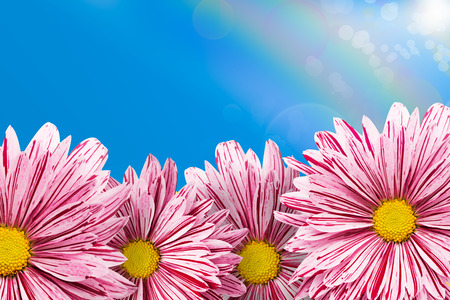 Nice gerberas on the blue sky background photo