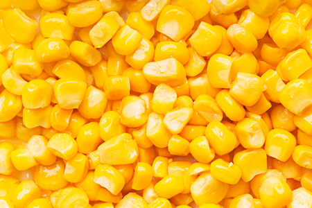 maize flour: Boiled corn seeds isolated on white background