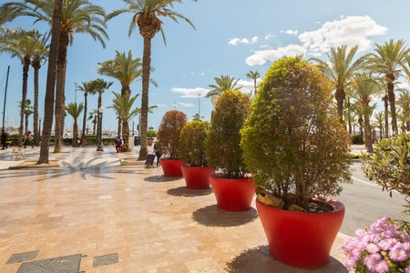 Palm trees and plants in the sky. Sun and flowers. Promenade street. Stock fotó - 101542178