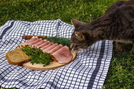 Cat sniffing ham on a wooden plate on a tablecloth on the grass