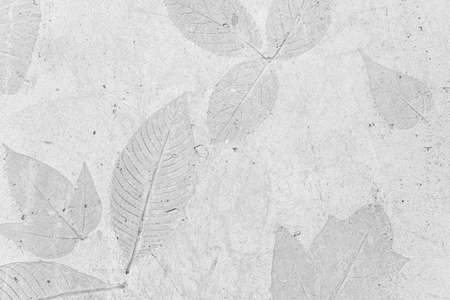 Leafs pattern of a plant stamped on the concrete, gray background