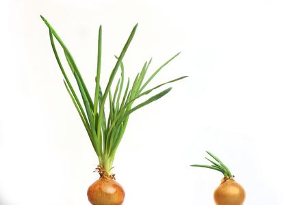 poignant: kitchen plants
