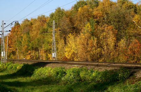 forest railway: A railway through an autumn forest