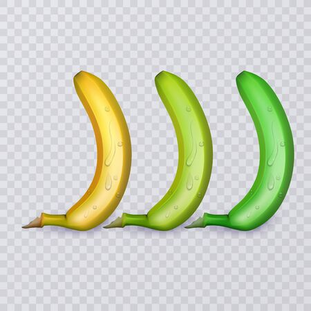 Set of three bananas, ripe, medium ripe and not ripe, vector eps 10 illustration