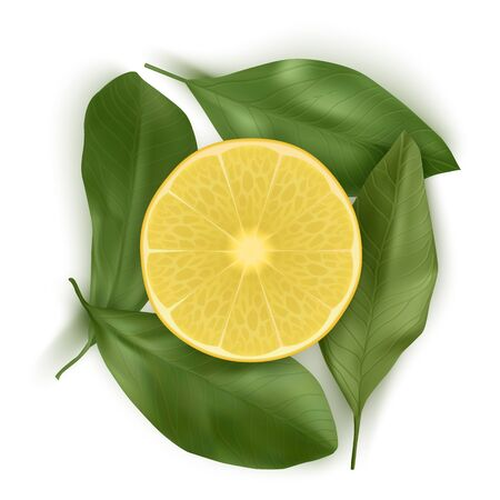 Bright vector set of colorful half, slice of Lemon. Fresh realistic slice of Lemon with leaves on white background. Top view, Vector illustration