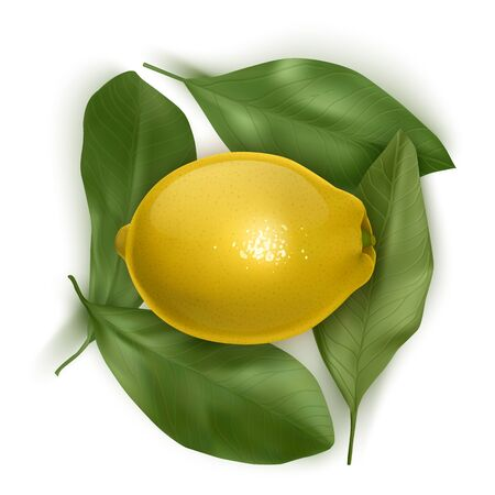 Bright of colorful Lemon, top view. Fresh Realistic Lemon with leaves on white background. Vector EPS 10 illustration