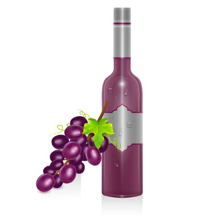 Bottle of red wine and bunch of grapes in realistic style, isolated on white background, Vector illustration