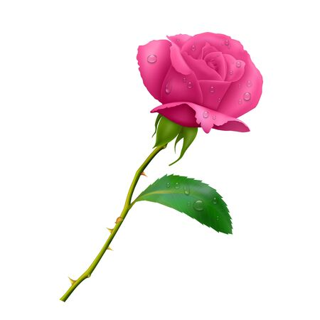 Beautiful pink rose on long stem with leaf and thorns isolated on white background, photo realistic vector Eps 10 illustration.