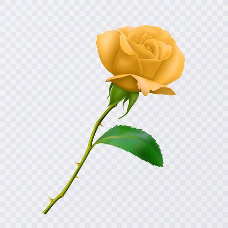 Beautiful yellow rose on long stem with leaf and thorns isolated on white background, decoration for your design, photo realistic vector Eps 10 illustration.