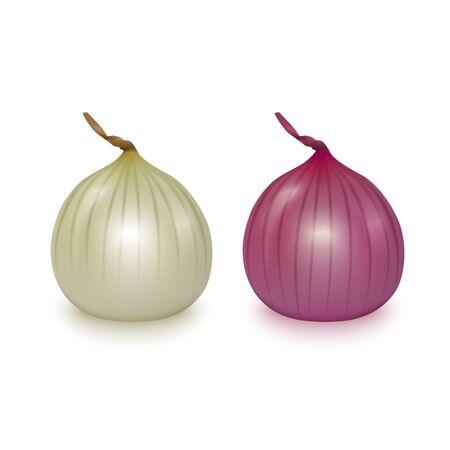 Bulbes d'oignons rouges et blancs entiers frais de vecteur sur fond blanc.
