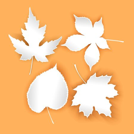 Collection beautiful autumn leaves isolated on orange background. Set of white leaves with shadows vector EPS 10 format Illustration
