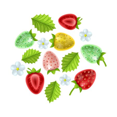 Strawberries of various varieties on a white background, leaves and flowers, isolated strawberry clipart on a white background, vector illustration Stock Illustratie