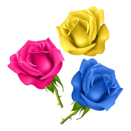 Set of realistic roses on a white background, isolated roses on a white background of pink, blue and yellow colors, vector illustration