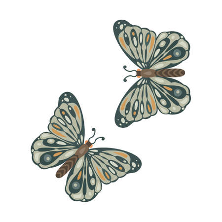 Set of beautiful, green butterflies isolated on white background Vector illustration