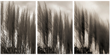 quietude: Little by little the breeze is altering the quietude of the reeds. Little by little the zeros and ones of the sensor an look for a soft transition allow them to capture That the power of the breeze.