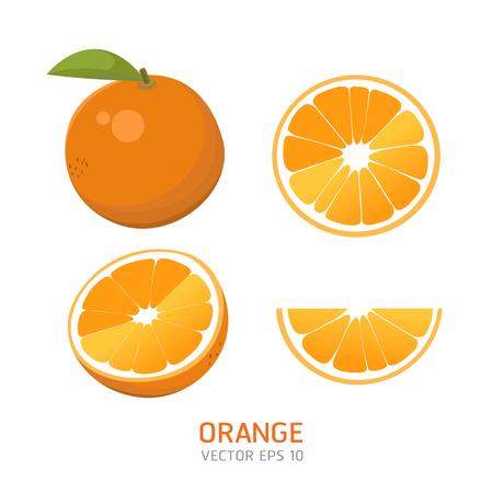 Vector oranges fruit illustration